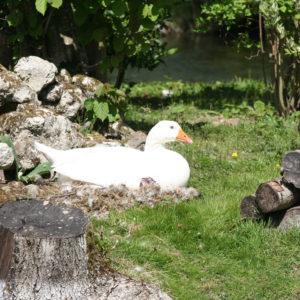animaux au château des boulard